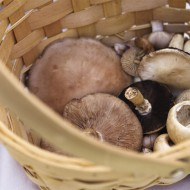 <b>Mushroom Week at Spice Market, Four Seasons Hotel ...</b>