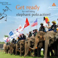 <b>The 11th Kings Cup Elephant Polo Tournament </b>