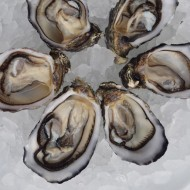 <b>Fine de Claire Oyster at Wine Pub</b>