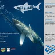 <b>100% Shark Exhibition at WTF Gallery</b>