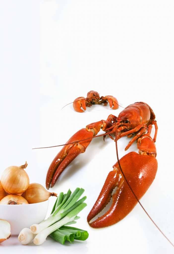 2.-Lobster-Indulgence_Espresso