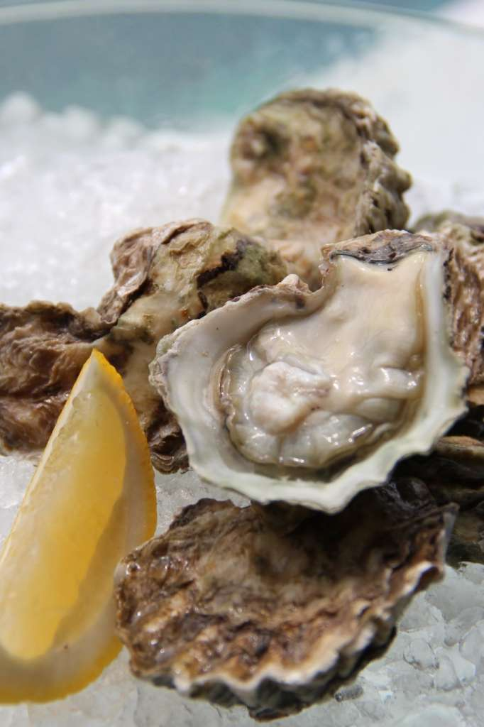 Oyster-1-1