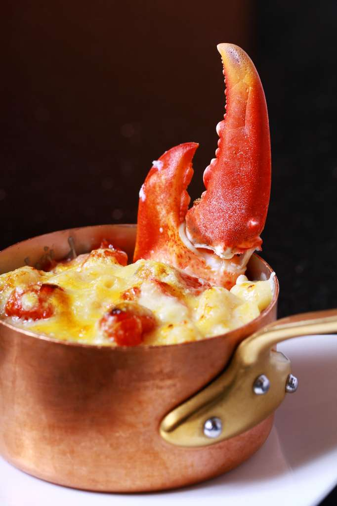Gratinated-maine-lobster-macaroni