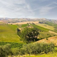 <b>Velenosi Wine Reception With Angela Velenosi at Th...</b>