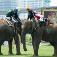 <b>The 15th King's Cup Elephant Polo</b>