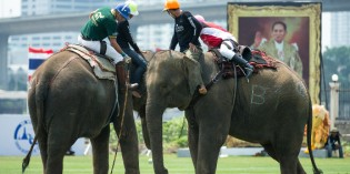 The 15th King's Cup Elephant Polo